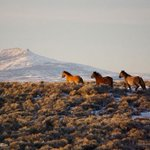 Image of justice4mustangs from Twitter
