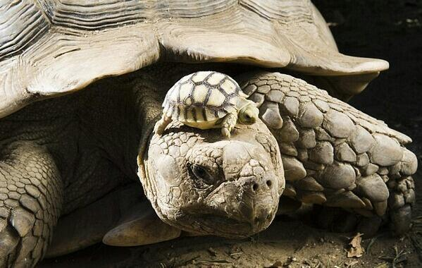 140 year old mom, with 5 day old son. http://t.co/96crog9Smp