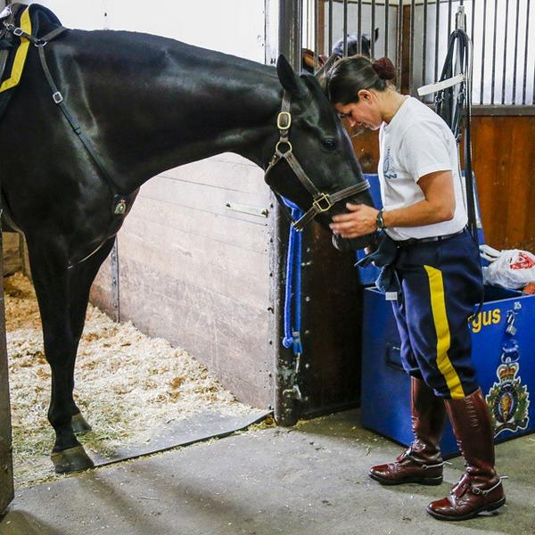 RT @TourismCalgary: A member of the #RCMPMusicalRide bonds with her #horse Fergus. Photo by @Jmacpix @spruce_meadows #capturecalgary http://t.co/JRNBKRt8lK