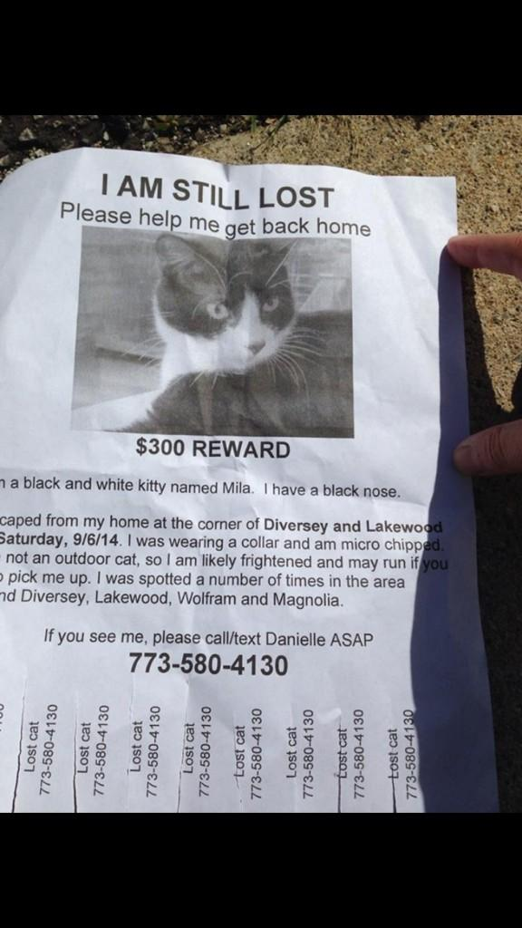 Folks, my friend's cat is missing in Lakeview (Diversey/Lakewood). Please help me help her and RT this poster: http://t.co/wrWf48c26F