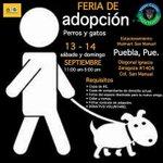 Hey recuerden hoy hasta las 5pm la FERIA DE ADOPCIÓN de Perros y Gatos en Estacionamiento Walmart San Manuel #Puebla http://t.co/ZFc9Aj9HKO