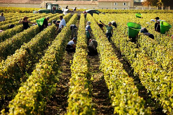 Our favorite time of the year! Harvest in Bordeaux! #Harvest2014 #BDX2014 http://t.co/Bgvga9DXrX