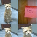 "Жена оставила записку - ""Не верь коту он ел"" http://t.co/Wv9Tyh5l9m"