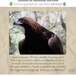 #ÁguilaReal símbolo de identidad nacional, protegida por @PROFEPA_Mx. #FanDeMéxico y sus especies #VivaMéxico http://t.co/pDjhHmqBQV
