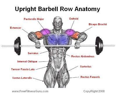 ¿Qué musculatura activas con el remo al cuello? Ojo a esta imagen: http://t.co/bGrpFj9R7B