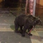 RT @A3Noticias: Un domador deja atado a un oso a una farola mientras se va a un bar en Valencia http://t.co/9GVSv0zhOj http://t.co/OedO1sqRV8