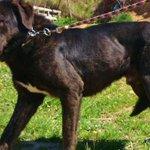 Una protectora de animales cierra sus puertas y busca adoptantes para sus últimos ocho perros http://t.co/wQxJyRCc5B http://t.co/er7KW3VWl1