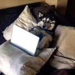 RT @BuzzFeed: 21 Dogs Gettin' Down To Business http://t.co/1TwYPOAna2 http://t.co/RK4g7RnxEY