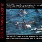 RT @Buzzy14: TEARFUL & TERRIBLE TUESDAY AS THE COVE IN TAIJI TURNS RED WITH THE BLOOD OF INNOCENT DOLPHINS!! #tweet4taiji http://t.co/a9q35YEz4Z