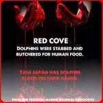 RT @cathorio: #Tweet4Taiji: Sad news, The Cove is Red.......... http://t.co/bMnfkc2MSa
