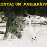 Pelipäivä, juhlapäivä! http://t.co/HLu8uyH6yC #Ilves #Kärpät #Liiga #Tampere http://t.co/hFTVslJ6lZ