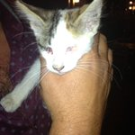 Urgent!Blind 6 w/o kitten on Poros,lovely little thing-vulnerable and not safe!please help #rescue #cat #greece #love http://t.co/3nWGcTChiy