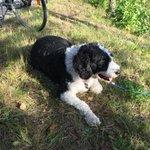 Kangasalan kolaripaikalle jäi tämä yksinäinen koira joka etsii omistajaa. #tampere http://t.co/aj3OYJHrGi