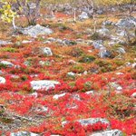 RT @thisisFINLAND: #Finnish #Lapland in #autumn colours! More about Finnish wilderness: http://t.co/USc4PPqwVx Pic:Pia Toivonen http://t.co/W0bVHLpItB