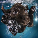 'Underwater Puppies': Dive into these photos of canine cuteness http://t.co/BYbeF0dmQM http://t.co/mCTvoXjJ4s