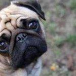 RT @TabascoHOY: En #Chihuahua, un sujeto disaparó contra perro por hacer sus necesidades en su casa http://t.co/uJ9kvDTZvv http://t.co/enAz4Y1nCO