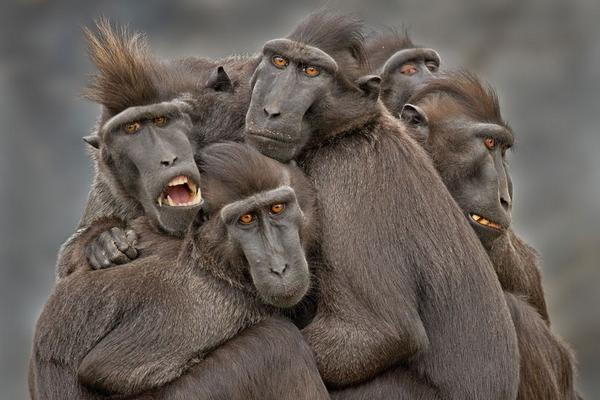 Ape Family by Jozef de Fraine  #photography #animals http://t.co/LKEluPezPS