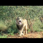 RT @MollemMortesen: Namibia, I miss you ????#Namibia #Africa http://t.co/AVm5deYvtz