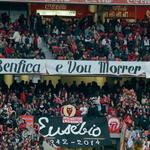 RT @bianca7ca: A frase já esta usada mas..Existe uma linha que separa os adeptos do Benfica de todos os outros! #CarregaBenfica http://t.co/78JzZ9QILI