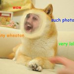 Wow. RT @DogeTheDog: Wow       So Wil    Very Wheaton               Such photo           Much shop