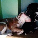 RT @JornalOGlobo: Amigo, estou aqui: cães inseparáveis que seriam sacrificados são adotados juntos. http://t.co/HVAqDO1FUO http://t.co/sfGYwlYt09