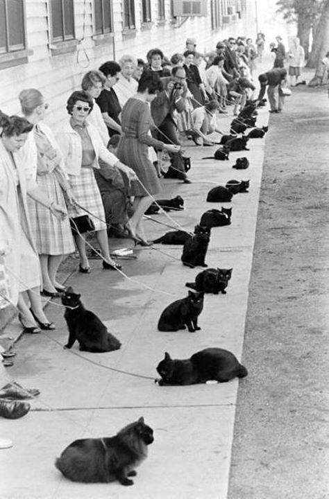 Auditions for the part of a black cat, Hollywood, 1961. (Ralph Crane) http://t.co/eXgCr2x0CE
