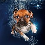 RT @guardian: Underwater puppies – in pictures http://t.co/TUs5KDPHXI http://t.co/HLZdMms4n6
