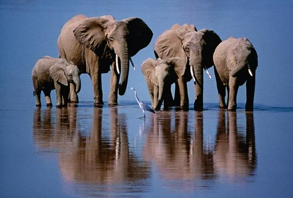 50 Years of Wildlife Photographer of the Year – in pictures http://t.co/PNHMKdmGCj http://t.co/HpLzdGxIST