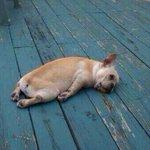 RT @instagranzin: Eu acordando http://t.co/PntO7MWN8F