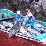 #Tweet4Taiji #StopKillingDolphins Wallowing sea blood the scum eon years behind in civlization. Moral plague! http://t.co/66LmJO2hWw