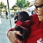 RT @NEWaukee: How cute are our furry little friends from the Wisconsin Humane Society? #NightMarket http://t.co/VCjKWL7wTV