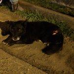 RT @cpeterscosimo: Alguien d @movimientovidas q pueda ayudar en Isla Teja afuera del Bunker un perrito necesito ayuda ???? #valdiviacl http://t.co/TAFfnCgJ7S