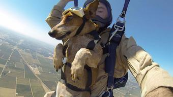 VIDEO: Riley the dog and his owner, a SF resident, had the ride of their lives skydiving! http://t.co/7NWTNRVzxU http://t.co/o6JSxCpDZK