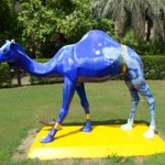 #project The @AlQasr #camels are getting a #makeover ... Fresh #paint and lots of primping! @MadinatJumeirah #Dubai http://t.co/30ZiGJX4Ka