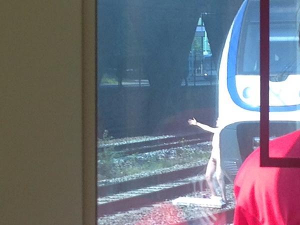 Vertraging bij Sloterdijk met de #ns... Er staat een naakte man op het spoor... http://t.co/5Wg76gO2vf