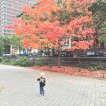 Finally found our first of fall's fantastic foliage. #park