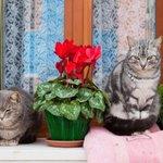 【画像多数】水の都ヴェネツィアを気ままに散歩する猫たち http://t.co/7FQAKZ9nDz http://t.co/9FM73jUV6l