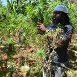 Justice minister in Jamaica says legislation has been drafted to decriminalize marijuana http://t.co/sRPIVXvVCD http://t.co/NRGUBUd6qe