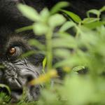 RT @Estadao: Planeta perdeu metade da sua fauna em 40 anos, diz WWF http://t.co/V3RpEZFJGE http://t.co/PTawM2Ja6B