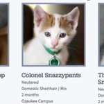 Whoevers naming the adoptable kitties at the SPCA is on fire. http://t.co/SUdACXkwcf