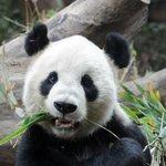 RT @livedoornews: 【無料の日】10月1日は「都民の日」上野動物園など20施設が無料に http://t.co/lpOcCBcYcq 東京都江戸東京博物館、東京都現代美術館(以上常設展のみ)、「江戸東京たてもの園」のスタジオジブリ展も無料だ! http://t.co/4kzGJQYPic