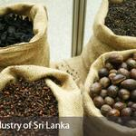RT @EDBTweets: #SriLanka was historically attractive for its spice riches. Get more info on spice exports- http://t.co/ebEbN7UIOT http://t.co/5lVzVi9D6d