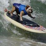 RT @BFMTV: VIDEO - Une compétition de surf qui a du chien http://t.co/f89S7ahT6u http://t.co/CatKWzCiAa