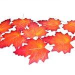 Artificial Autumn Leaves! http://t.co/ejiGKSfPkn Ideal Autumn & Halloween Decorations! @UK_GD #bizitalk #halloween http://t.co/MSTXMG4JvP