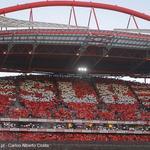 RT @Caladooo: RAÇA QUERER AMBIÇÃO NÓS SÓ QUEREMOS O BENFICA CAMPEÃO #CarregaBenfica http://t.co/UE1j5Eb9Im