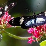 Necesitamos planeta y medio para lo que consumimos en ecología http://t.co/lukbBW4Blq http://t.co/nuMYgzPUpO
