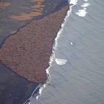 RT @guardian: Walrus mass on Alaska beach - in pictures http://t.co/u1MRK4npgA http://t.co/brgEbmaeC5