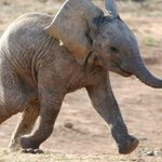 Happy Wednesday. Lets all try to be as happy as this elephant. http://t.co/a18Wl013Lq