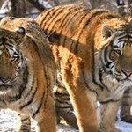 RT @nacion: En 40 años desaparecieron el 50% de las especies salvajes de todo el mundo http://t.co/bN39ZkUOfj http://t.co/eBXYejoZSs