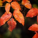 RT @NewsOK: Loving this fall weather? Share your fall foliage pics with us on the NewsOK Now app or at http://t.co/micYIkeP4u http://t.co/vuneWv5OGR